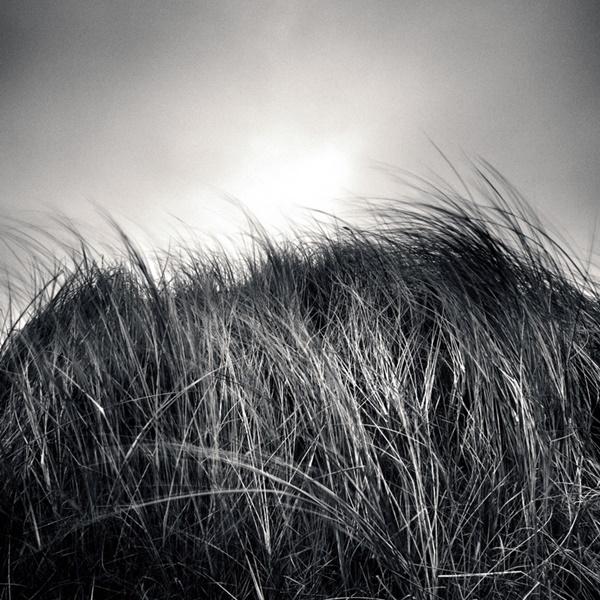 Raven Reserve