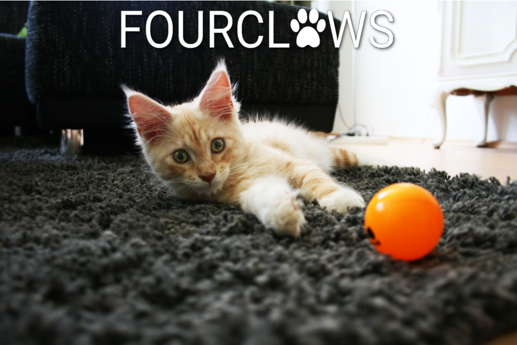FourClaws