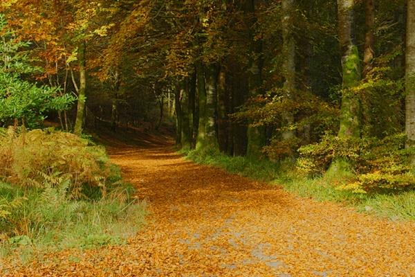 Derry-LearmountForest-AndyMcInroy