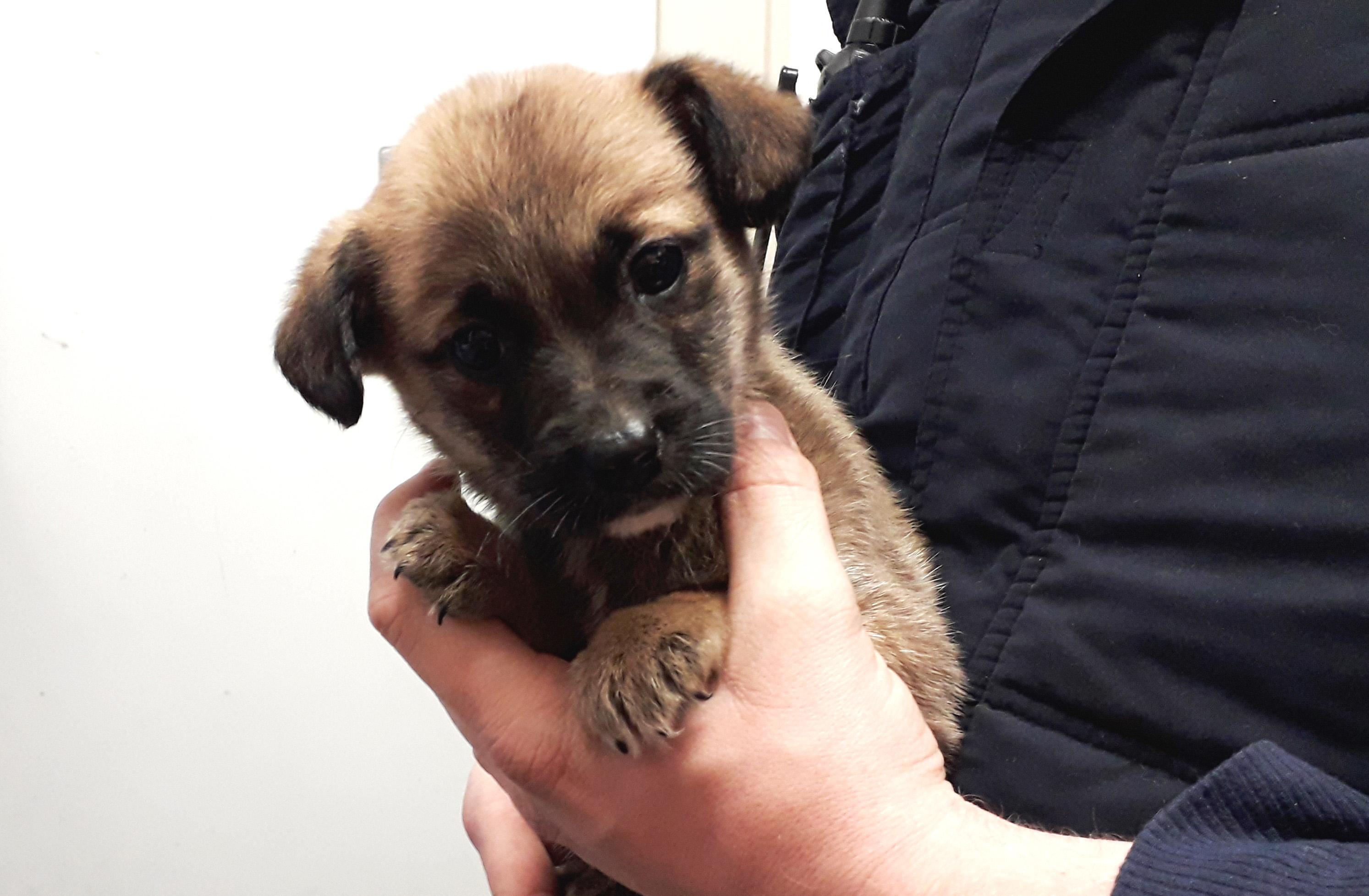 ISPCA dog rescue