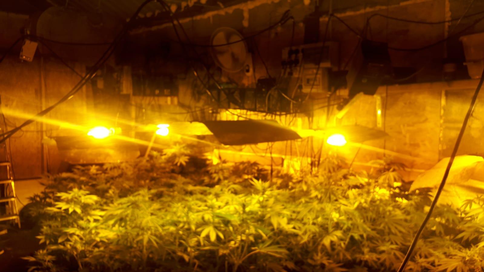 cannabis limerick